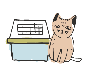 abituare gatto trasportino