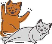 gatto aggressivo con gatti