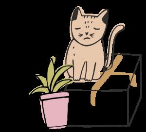 trasloco con gatto