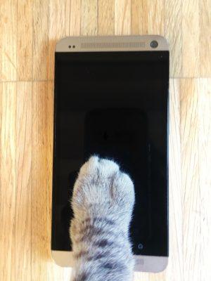 gatto smartphone